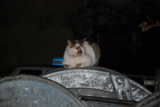 Un gatto su un cassonetto a Tropea in una sera d'inverno (3544 clic)