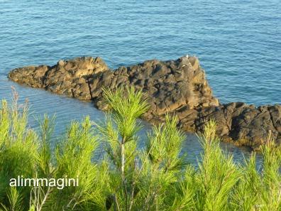 ...guardando il mare ! - Imperia (2331 clic)