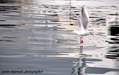 Atterraggio...sull'acqua ! (479 clic)