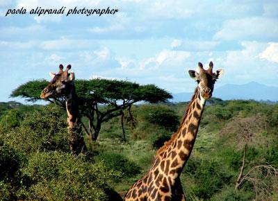Parco Serengeti.... (489 clic)