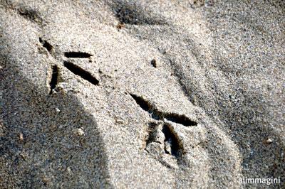 ...sulla sabbia del mare..... (466 clic)