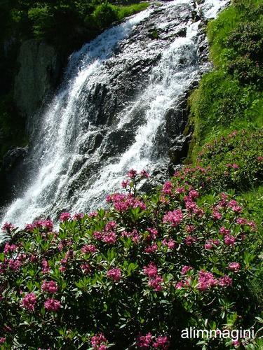 Tra acqua e fiori ! - Monesi (1698 clic)