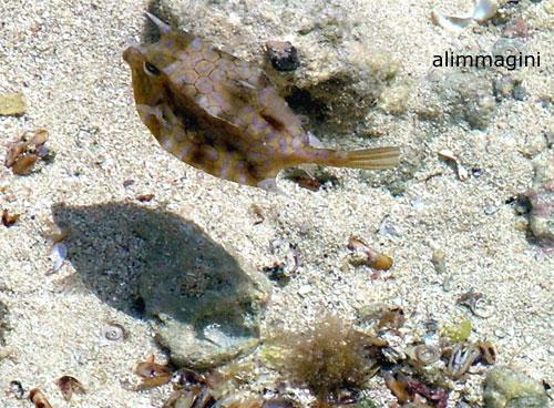 Le trasparenti acque dell'Oceano Indiano... (473 clic)
