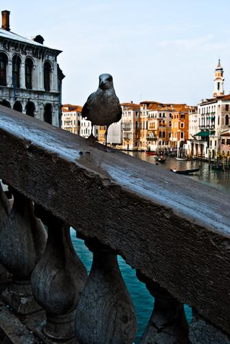 The King of Venice - Venezia (2069 clic)