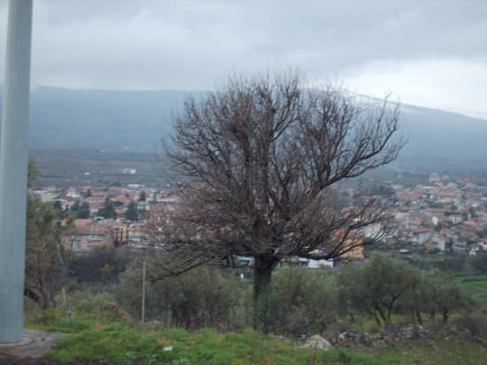 l'Etna e Linguaglossa (3281 clic)