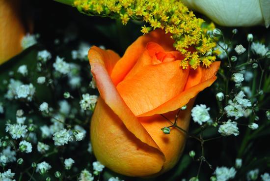 rosa arancio (600 clic)