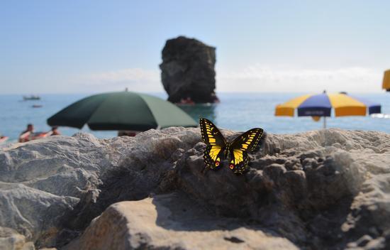 farfalla (534 clic)