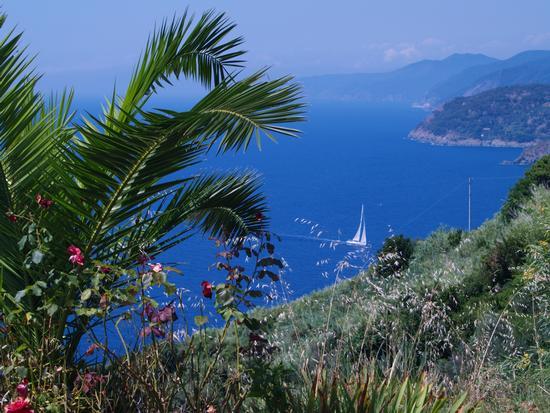 passando a Punta Mesco - Levanto (2983 clic)