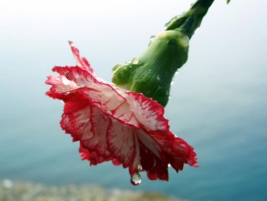 Ascolta,  piove... - Pizzo (4054 clic)