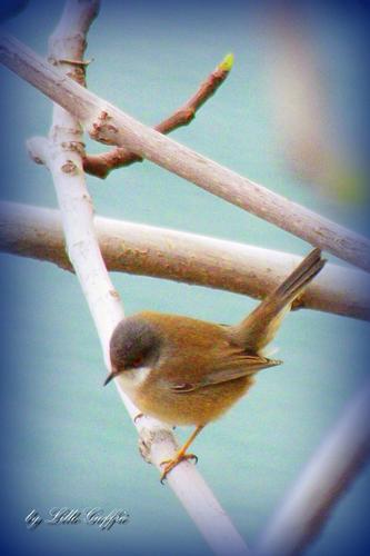 Natura tenera (705 clic)