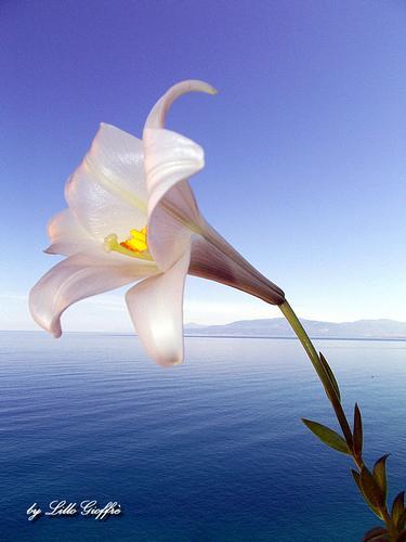 La primavera in un fiore -  - inserita il 25-Feb-13