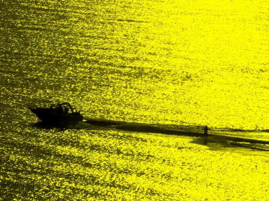 Sci nautico sul mare dorato -  - inserita il 19-May-11