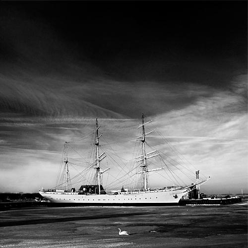 The swan sea (969 clic)