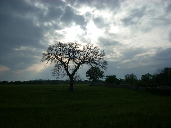 sfumature di grigio - Gioia del colle (2009 clic)