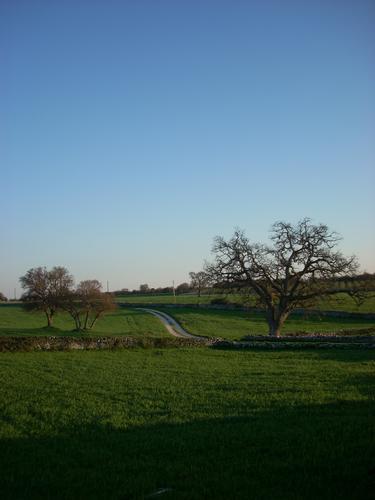 ...tra distese verdi - Gioia del colle (2799 clic)