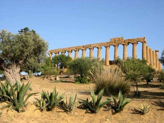 Tempio di Giunone - Agrigento (2915 clic)