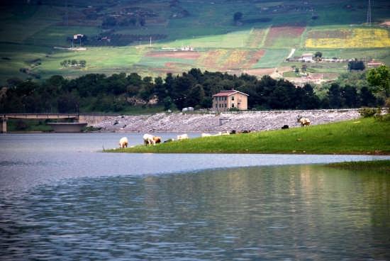 Lago Scanzano  - Marineo (5345 clic)