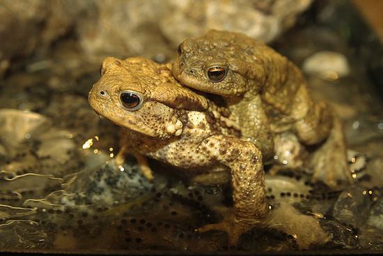 toad 2  - Longone al segrino (1560 clic)