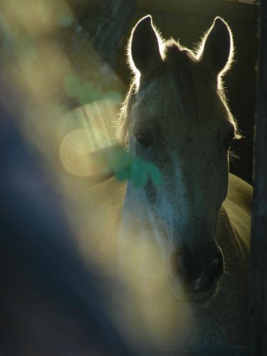 Magic horse (858 clic)