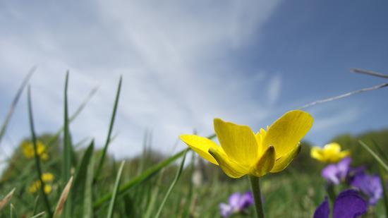 Sboccia la Primavera - Spezzano della sila (2264 clic)