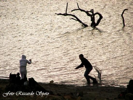 Lago di Pozzillo, Regalbuto (4904 clic)