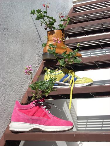 Alluce Verde - Porto torres (2301 clic)