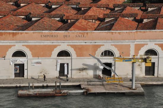 Mi è sembrato di vedere un gabbiano - Venezia (1629 clic)