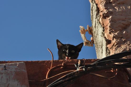 Gattino piccino piccio' (636 clic)