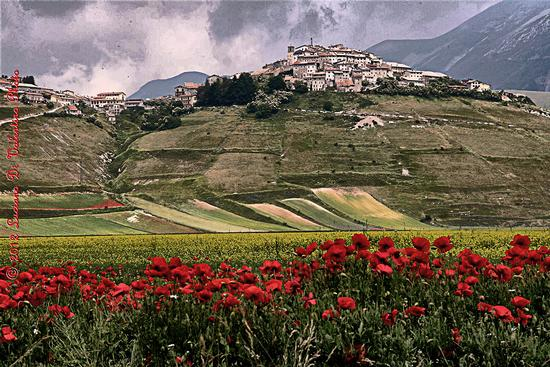 Fiorita - Castelluccio (4013 clic)