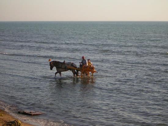 a mare con cavallo e carretto - Agrigento (10621 clic)