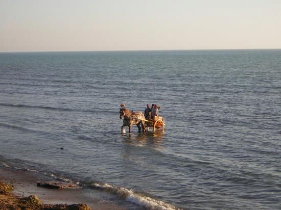 a mare con cavallo e carretto - Agrigento (4742 clic)