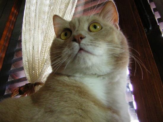 gatto cesare - Agrigento (4415 clic)