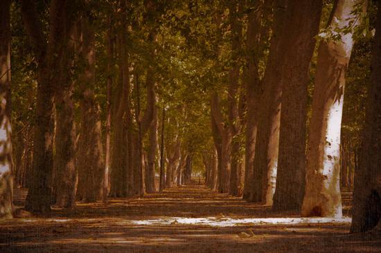 il sentiero di girona  (552 clic)