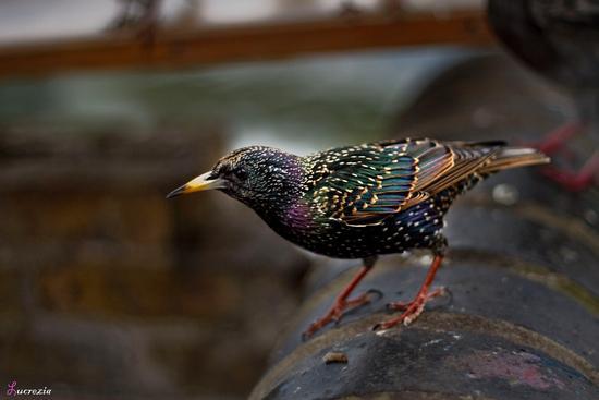 uccellino (565 clic)