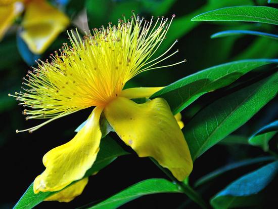 Fiore giallo - Rieti (1164 clic)