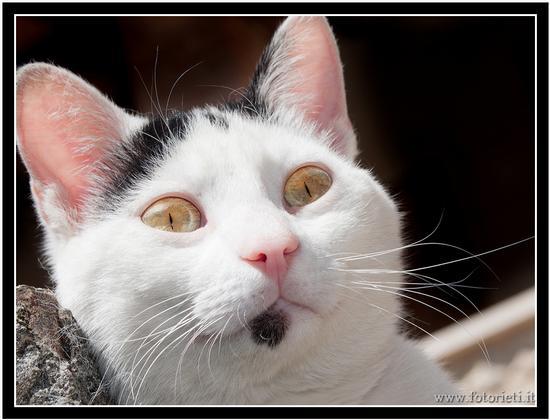 Gatto curioso - Rieti (1286 clic)