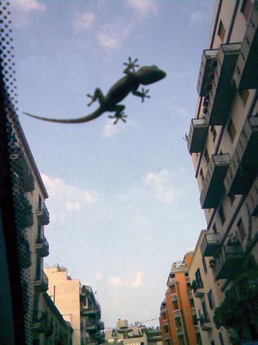 Godzilla - Palermo (3089 clic)