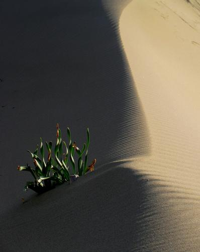 Scolpita dal vento - Sabaudia (2078 clic)