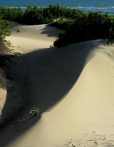 Dune - Sabaudia (830 clic)