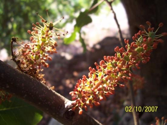fiore di karrua - MODICA - inserita il 04-Oct-07