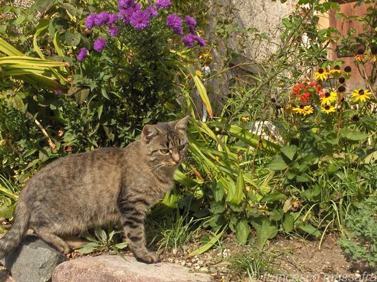 gatto - Fie' allo sciliar (1550 clic)