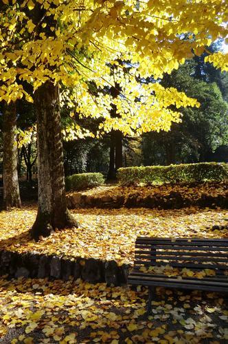 autunno dorato - Arezzo (1177 clic)