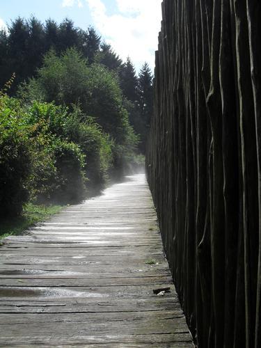 sentiero - Parco orechiella (940 clic)