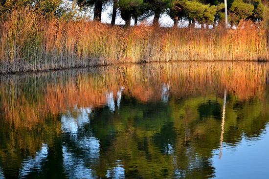 Lago di Schito  - Treia (2249 clic)