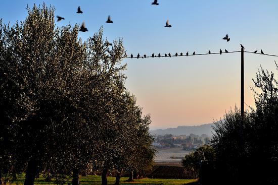 Uccelli - Treia (2165 clic)