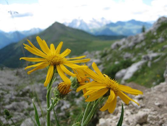 astri sul Giau - Cortina d'ampezzo (1593 clic)