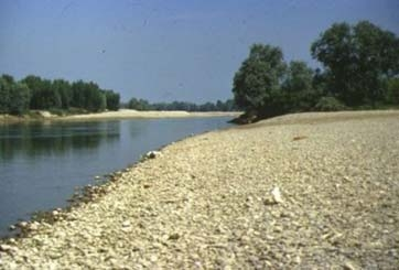fiume adda - Comazzo (2907 clic)