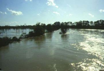 fiume adda 2 - Comazzo (2781 clic)