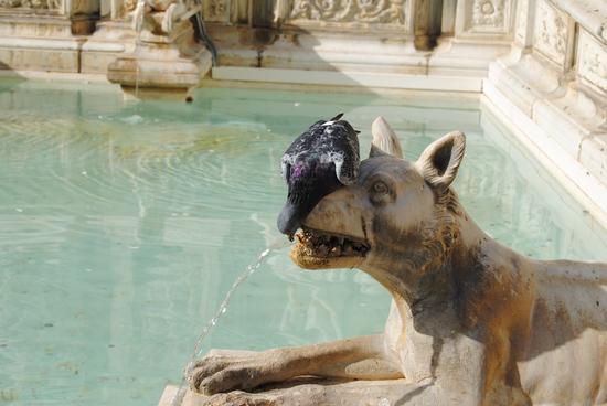 che sete  - Siena (1410 clic)