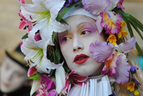 Fiori di Primavera - San felice sul panaro (2033 clic)